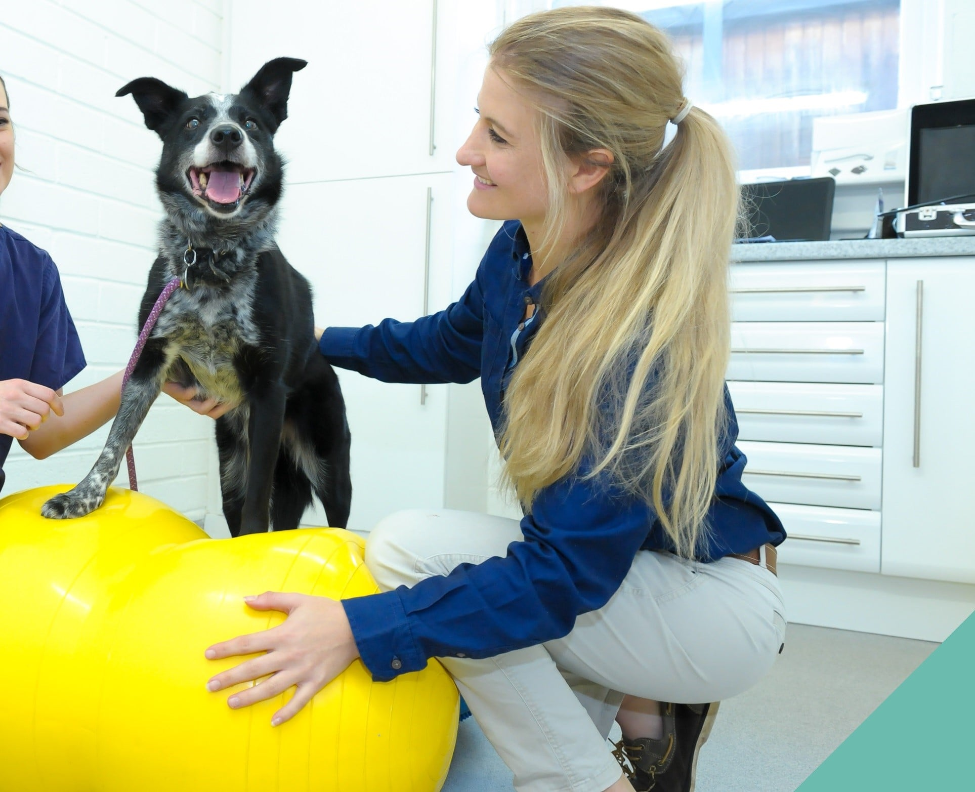 Physiotherapy for senior pets