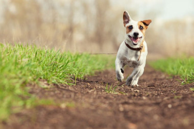 Flea and Worm Treatment For Your Dog