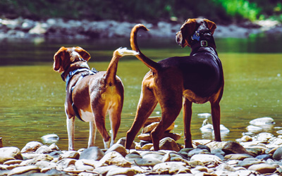 Worm prevention in dogs